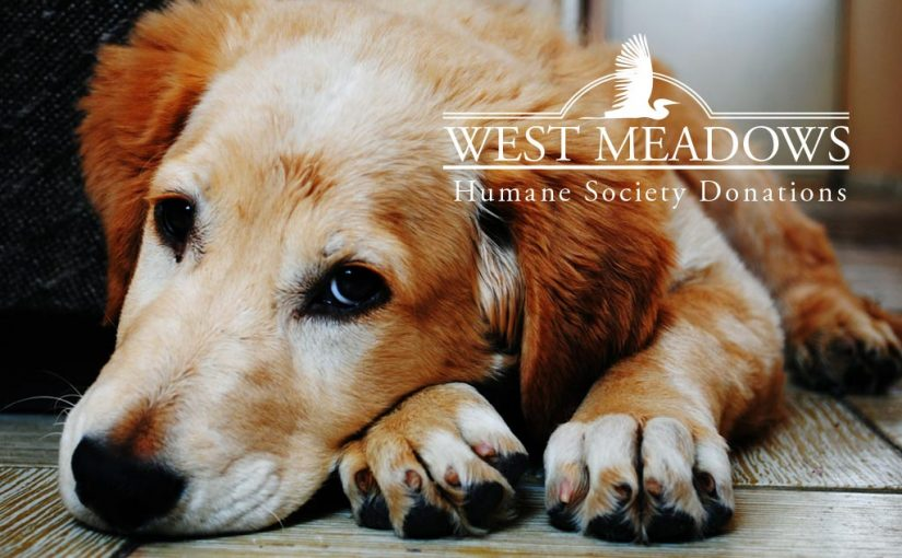 humane-society-blog