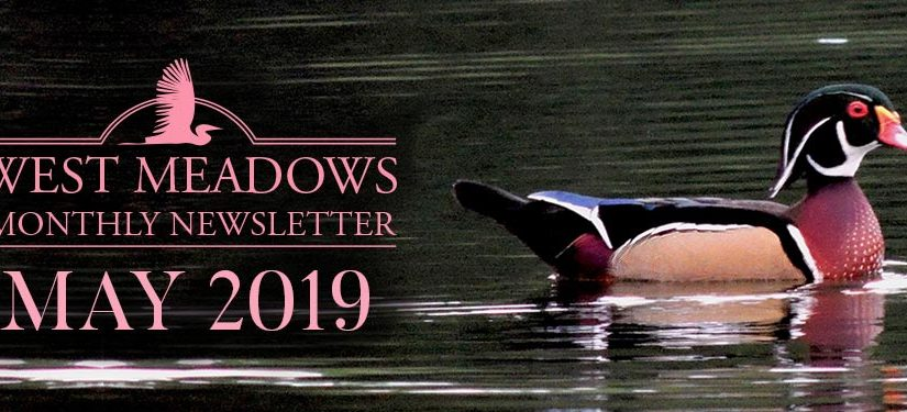 may-2019-west-meadows-v3